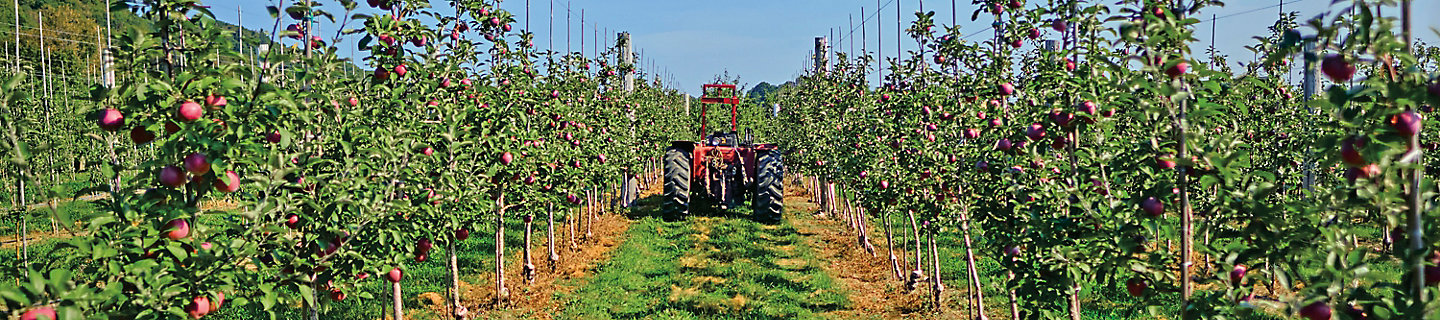 Image of an apple orchard