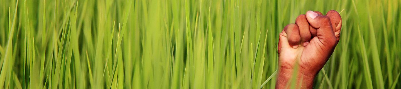 hand green field