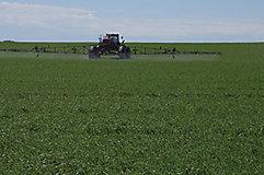 Back of sprayer in wheat field