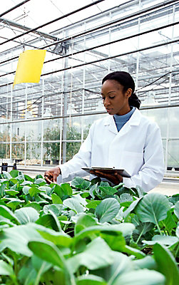 Woman with clipboard examining plants