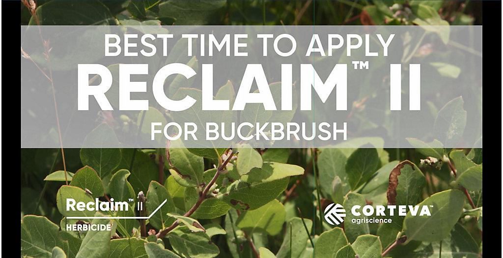 Best time to apply Reclaim II for Buckbrush