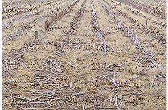 Image of burned crop field