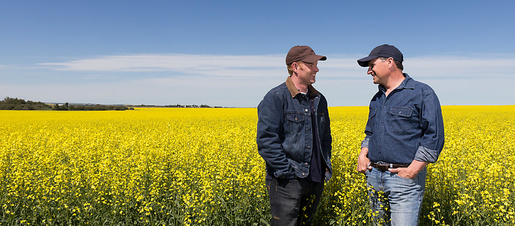 Canola farm with Experts