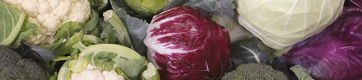 Image of a group of califlower, cabbage and broccoli