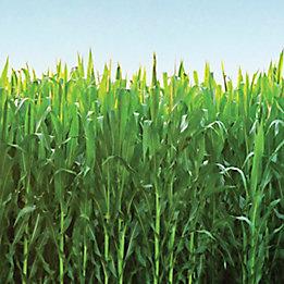 Aproach® Prima Fungicide  ̶  Crop Protection