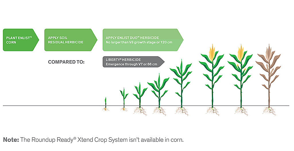 Corn growth with Enlist Duo graphic