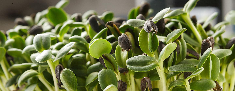 Proizvodi za varstvo rastlin