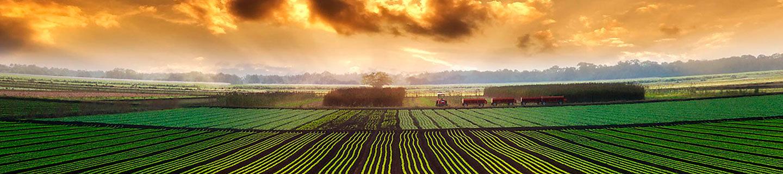 Campo de sementeira