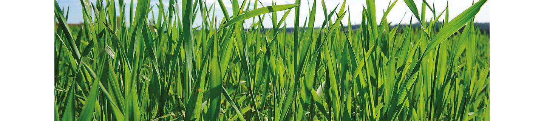 Adexar Fungizid Getreide
