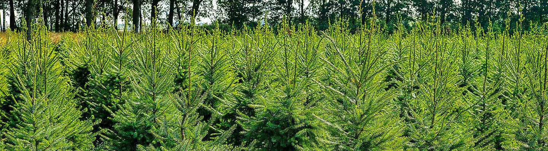 Corteva Baum und Forst