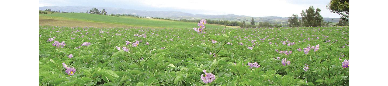 Curzate M WG Fungizid Kartoffel