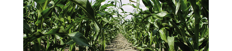 Principal S Pack Herbizid Mais