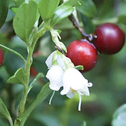 Fleur de fruit