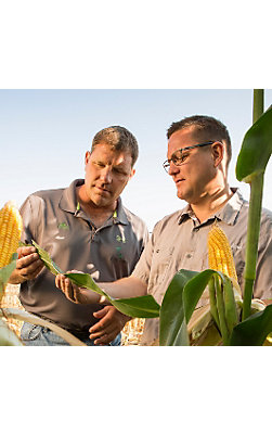 Two growers examine corn leaf