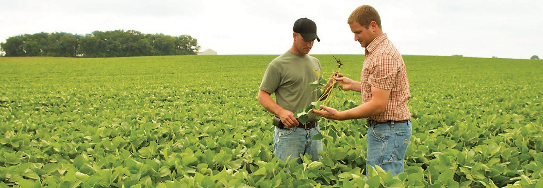 Diligent Herbicide