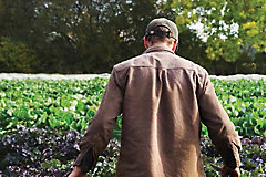 Horticulture Crop Protection Guide