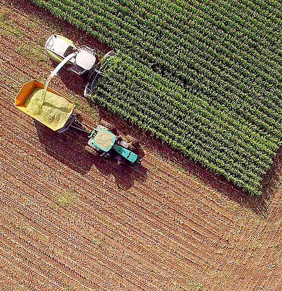 Plantación con tractor