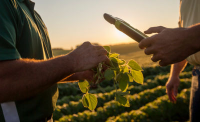 Inspecting soybean plants with tablet  in a field of soybeans