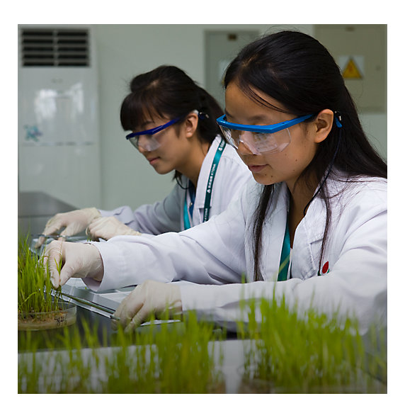 Two female lab technicians work with plants.