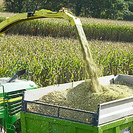 Maize forager spout