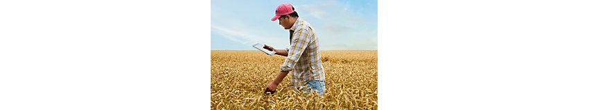 фермер в поле с пшеница