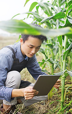 Asian man crouching and holding tablet in cornfield