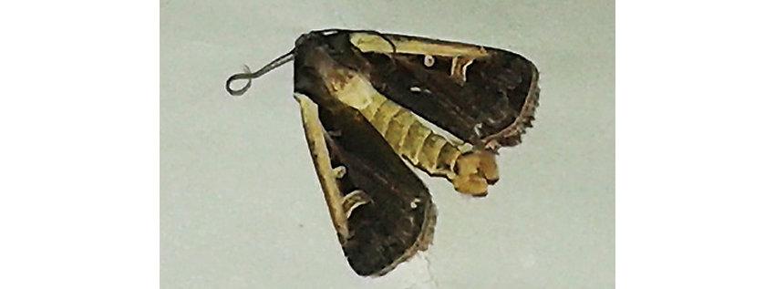 Moth Image