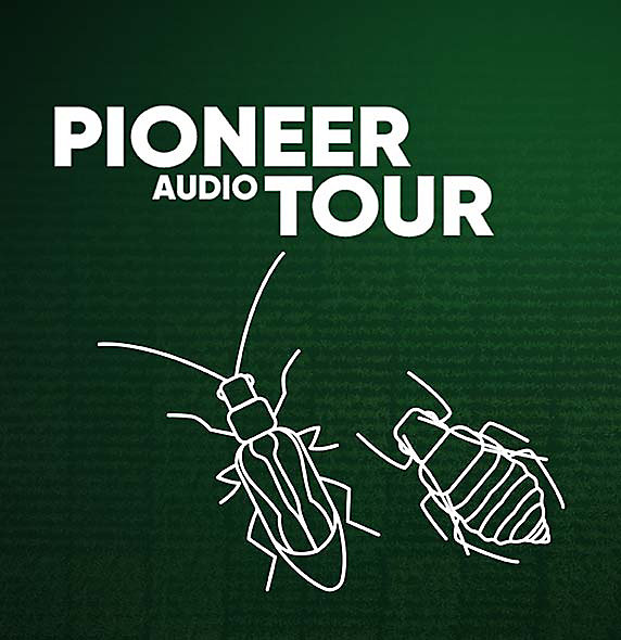 Pioneer Audio Tour - Insectary