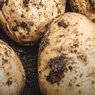 Potato Beauty