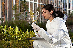 Female scientist checking plant