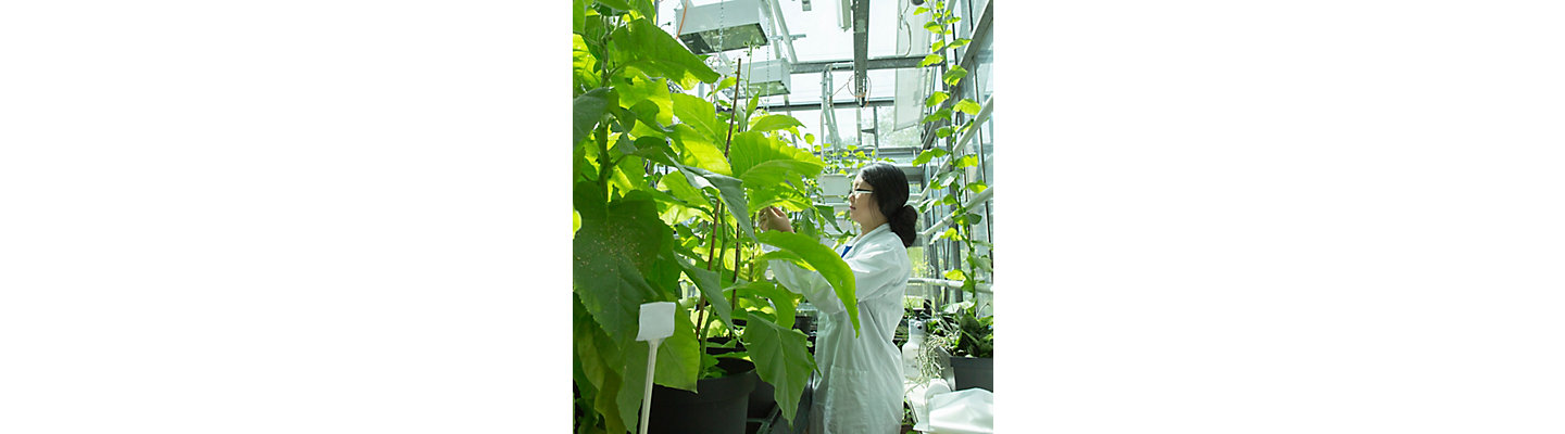 Scientist in lab with plants