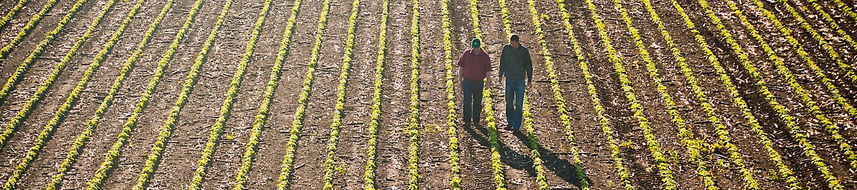 Image of two men walking in a corn field
