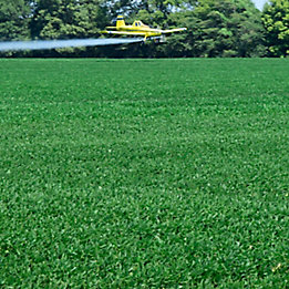 Image of a soybean field being arial sprayed.