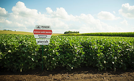 Soybean field with Pioneer sign