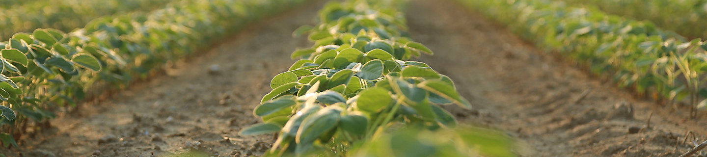 Battle weeds with Sonic® herbicide