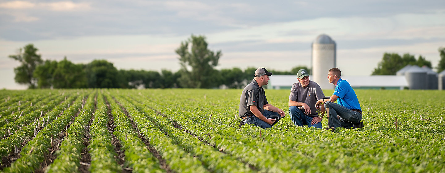 Three farmers crouch in a field discussing crop