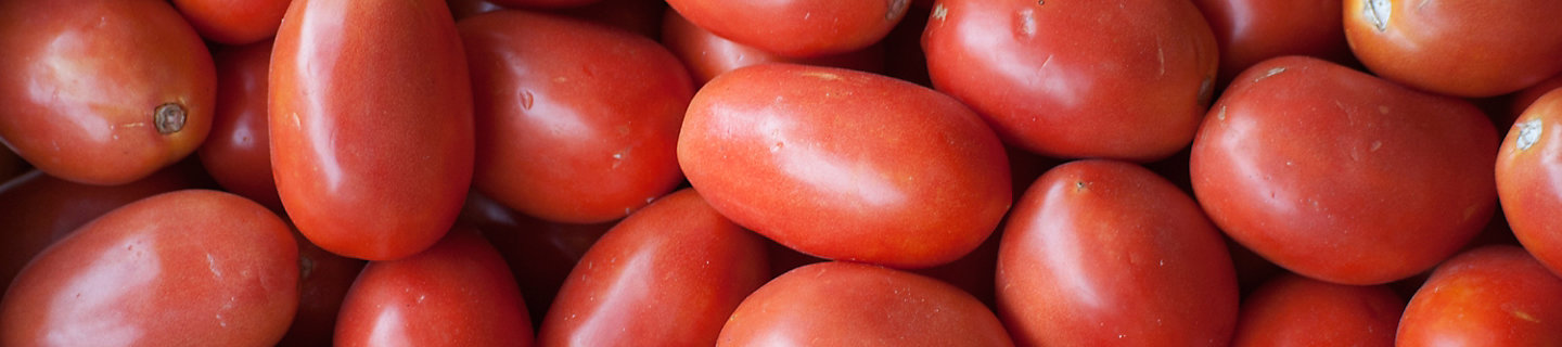 Image of harvested roma tomatoes off vine