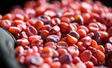 Imagen desktop de maiz rojo