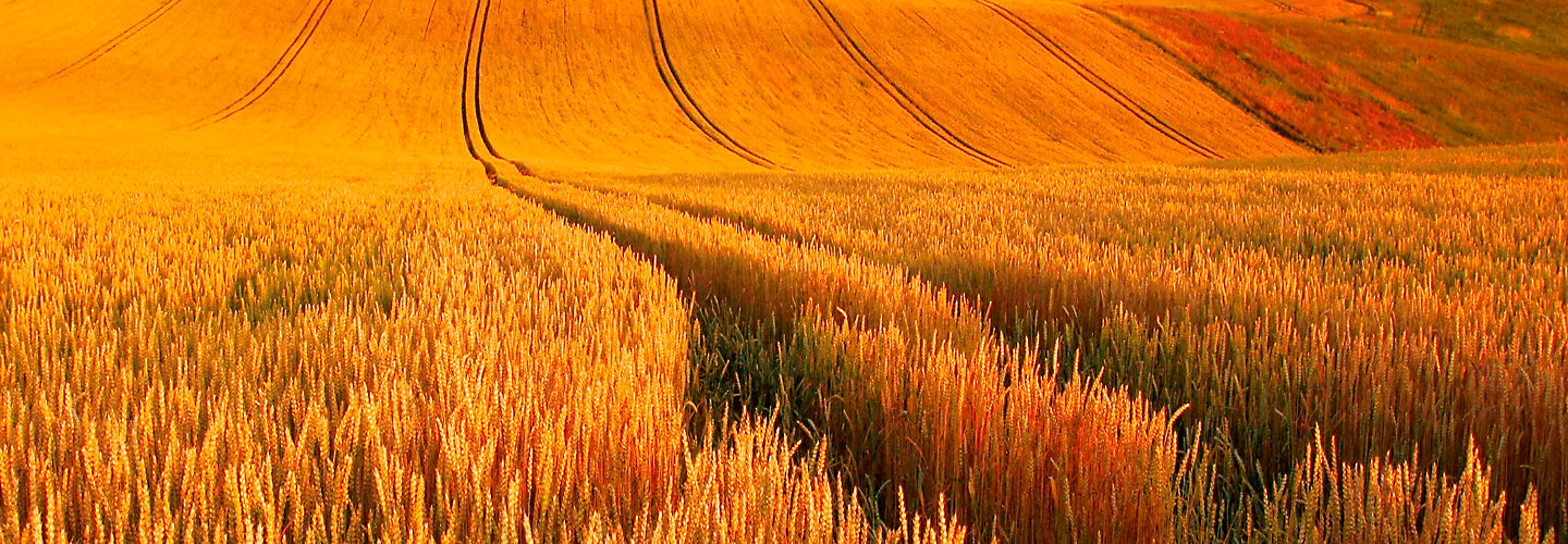 IMG-WheatField-1-Beauty-2880x1000
