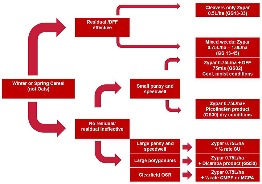 Zypar decision tree