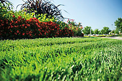 Image of commercial landscaped lawn with ornamentals