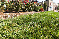 Image of lawn and ornamentals in a commercial space