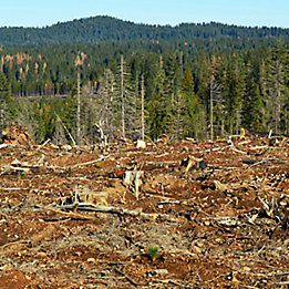 Image of trees cut down in forest