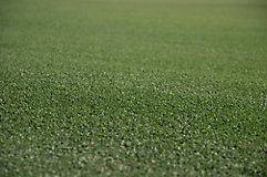 Image of greens on a golf course