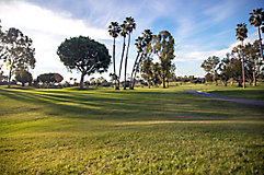 Image of golf course greens with palm trees
