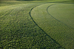 Image of close up of putting green collar