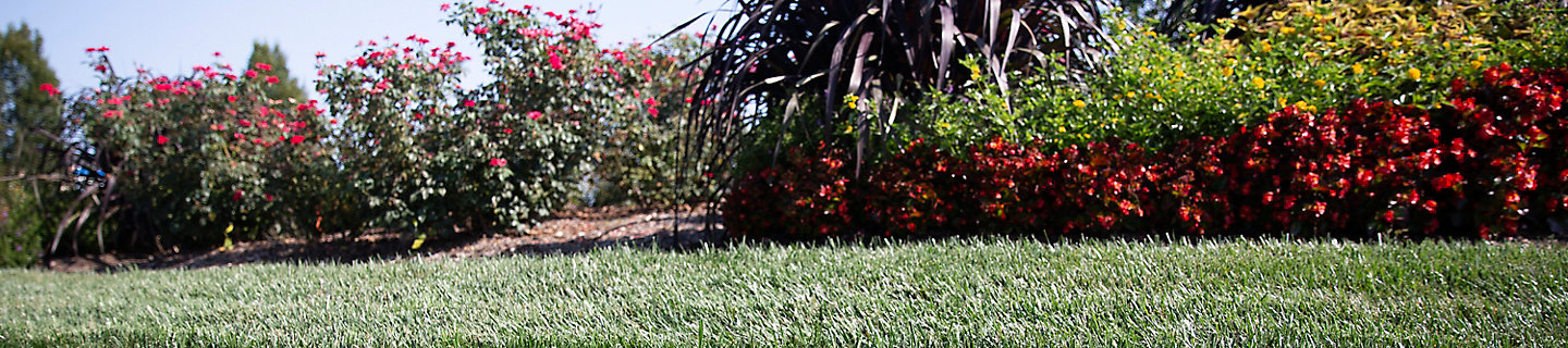 Image  of lawn and ornamental plant border