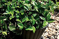 image of potted plants at a nursery