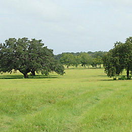 Image of pasture with mature trees