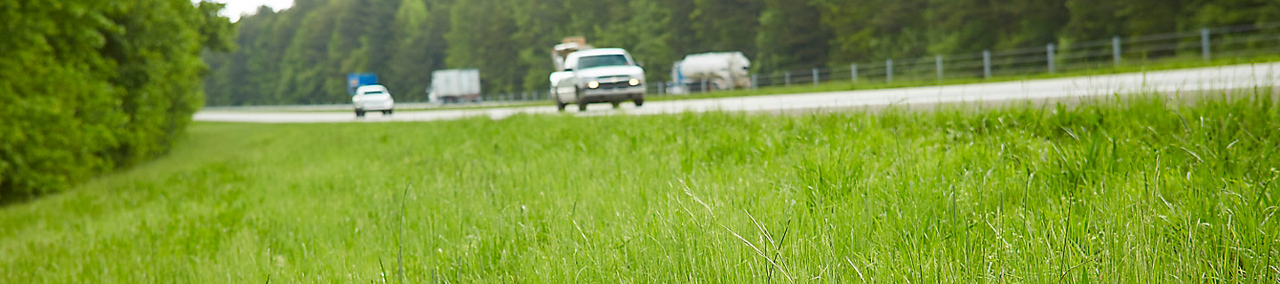 Image of highway roadside with grass and trees